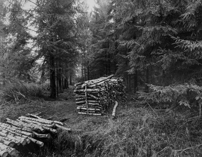 1996, Forêt de Compiègne